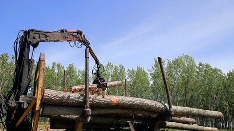 Loading A Truck Full Of Tree Logs - Lumber Industry. Crane Grabbing Pile of Logs at a Commercial Tree Farm. Heavy Duty Forest Machinery in Action.
