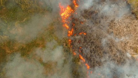 aerial footage forest fire on the slopes of hills and mountains, bush. Forest and tropical jungle deforestation for human food farming and export. large flames from forest fire. Using fire to destroy