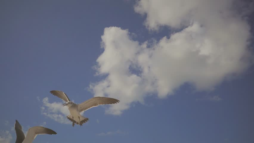 Flock of a seagulls gliding over sea, sea birds flying in summer. Beauty of the nature.
