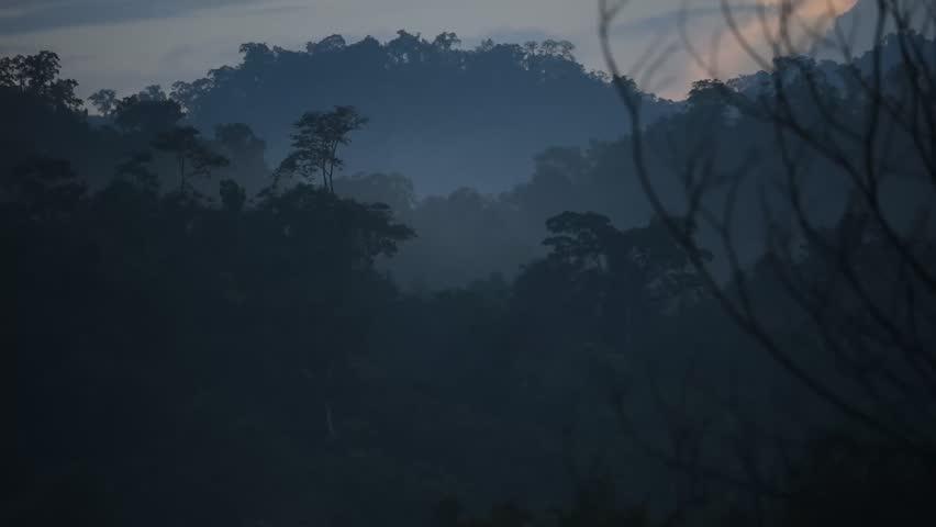Fog and sky blue | Shutterstock HD Video #1016130511