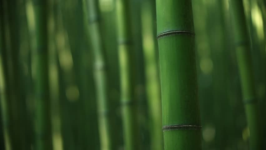Picture of bamboo forest | Shutterstock HD Video #1016247901