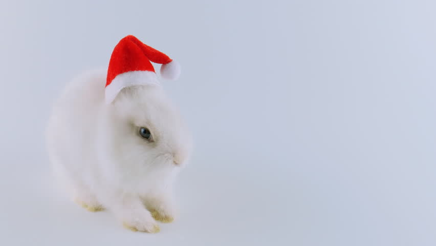 Cute white New Year bunny in Santa's cap, sitting and shows his tongue, isolated on white background, ProRes source codec, 422