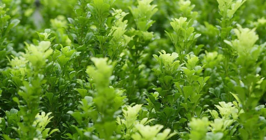 Green plant tree | Shutterstock HD Video #1016425411