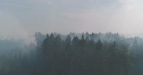 Forest in Fire, Burning Trees, Bushs, Burning Dry Grass in the Peatbog. Heavy Smoke Against Sky. Dron Shoot.
