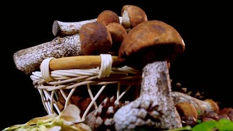 Basket with mushrooms brown cap boletus. Composition of edible mushrooms. Porcini Mushrooms