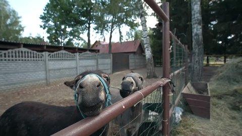 Grey donkeys in the paddock. Feeding the animals. Close up