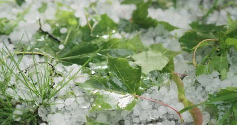 Slow motion closeup of hailstones on the grass after strong hailstorm