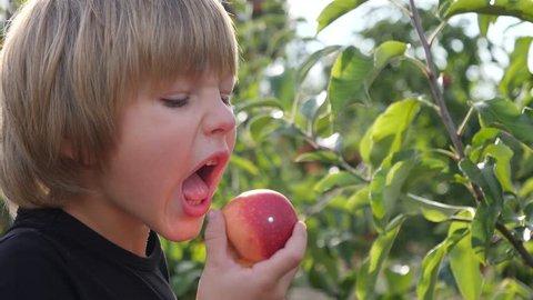 Cute child boy in sun light stay in apple tree garden outdoors eating ripe juicy fruits