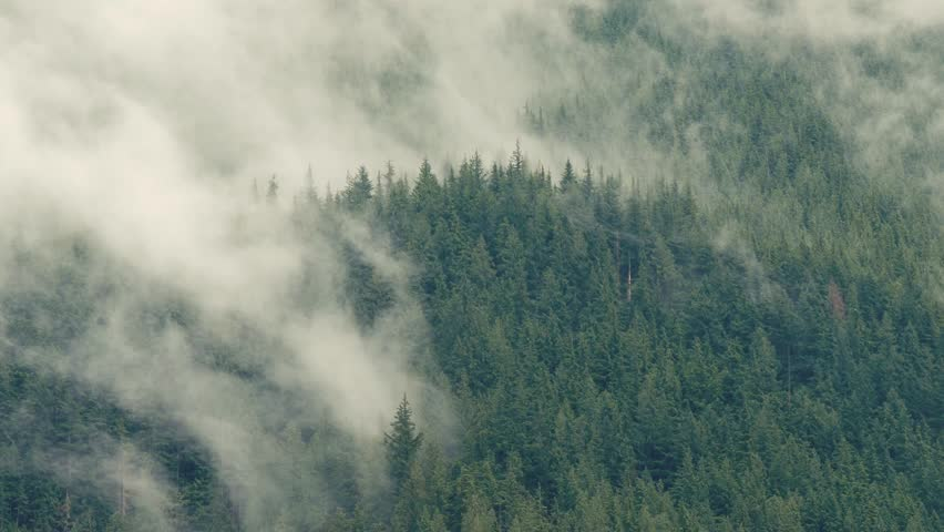Clouds rolling over a tree filled mountain, looking like fog. | Shutterstock HD Video #1016795461