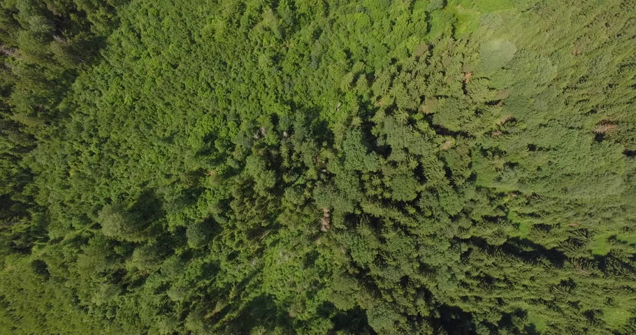 Aerial view of forest | Shutterstock HD Video #1016822371
