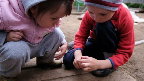 Little children play with a ladybug. Kids treat insect on hand, slow motion