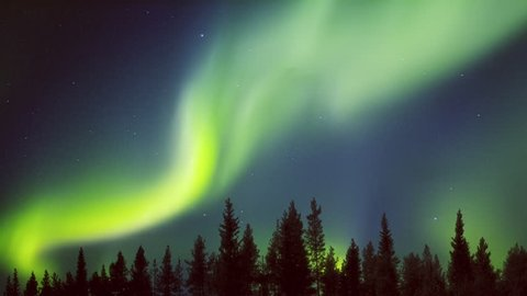 Northern lights curtains in a forest