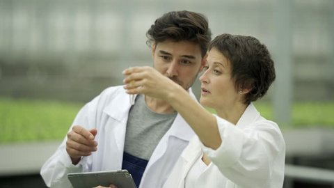 Tilt up of two quality control experts, man and woman in white coats, taking soil samples from pots with vegetable plant sprouts and examining sample in test tube