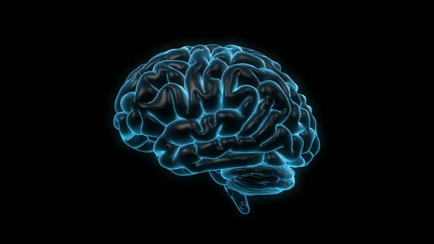 Rotating human brain on a black background. Seamless loop