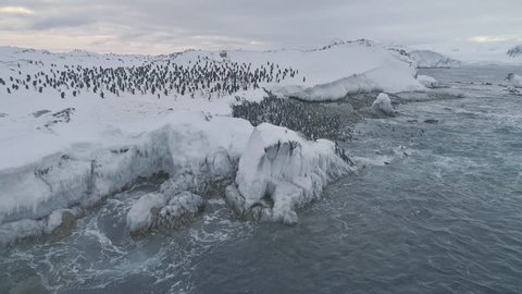 Antarctica penguins colony. Aerial drone view flight over swimming, standing Emperor penguins groups. Antarctic wildlife among snow ice sheet and raging ocean. 4k