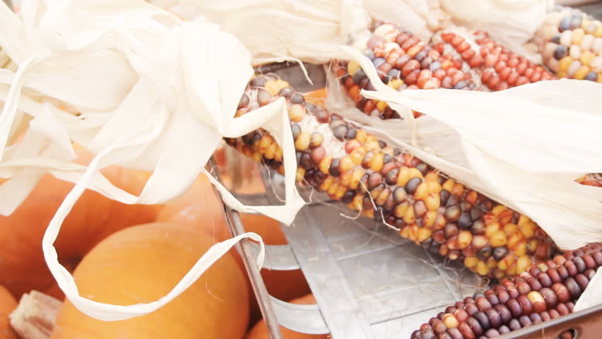 Orange corn for Halloween decorations. | Shutterstock HD Video #1017789931