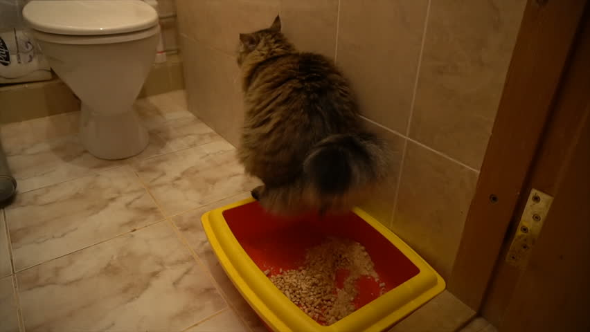 The Cat Poops Into the Stock Footage Video (100% Royalty-free) 1018205701 |  Shutterstock