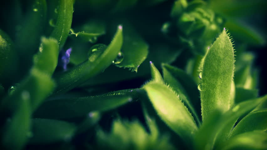 Beautiful 4k loop video background with leaves succulent close-up.  | Shutterstock HD Video #1018517371