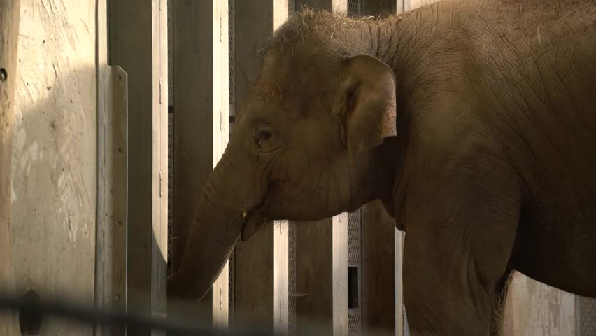 Elephant is eating in the zoo #1018598161