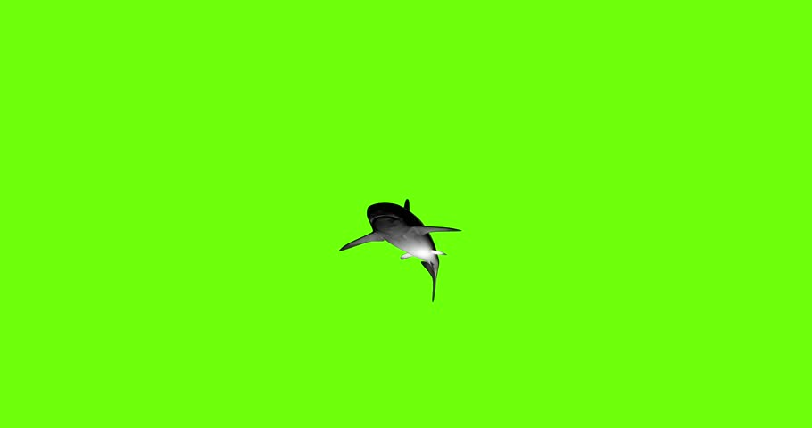 Animation of a 3D shark on a green background. | Shutterstock HD Video #1018694041
