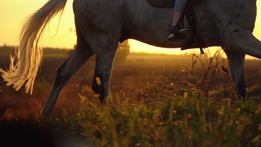 Close-up of girl legs riding on a horse on the field during sunset, slow motion