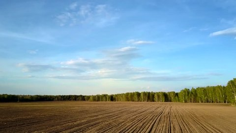 pictorial aerial motion above vast plowed soil field to green spring birch forest under blue sky with white clouds