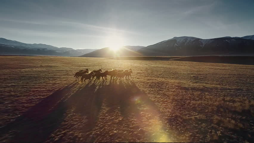 Wild Horses Running. Herd of horses running on the steppes in the background mountain. Sunset. Slow motion | Shutterstock HD Video #1018936891