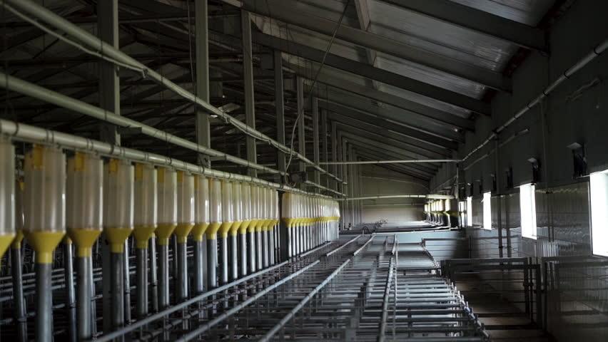Modern industrial empty farm for breeding pigs, modern tech automated room insemination (fertilization) | Shutterstock HD Video #1019244331