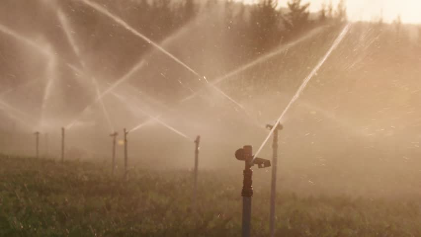 Slow motion of many impact sprinklers irrigating a field during sunset | Shutterstock HD Video #1019502031