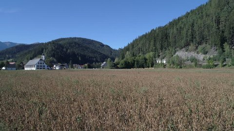 Farm field crops aerials in Austria 4k source Green grass and Dead cerops