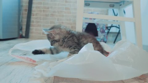 little cute kitten playing with plastic cellophane package. The cat plays in the package. cat pet in the package at home. curiosity lifestyle cat