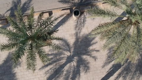 Drone flies in the middle of date tree palm and lands towards a pavement
