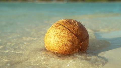 SLOW MOTION, MACRO, DOF: Gentle ocean waves wash the light brown coconut stuck on the beautiful white sand beach in Cook Islands. Glassy sea water splashes around the coconut on the shore of Hawaii.