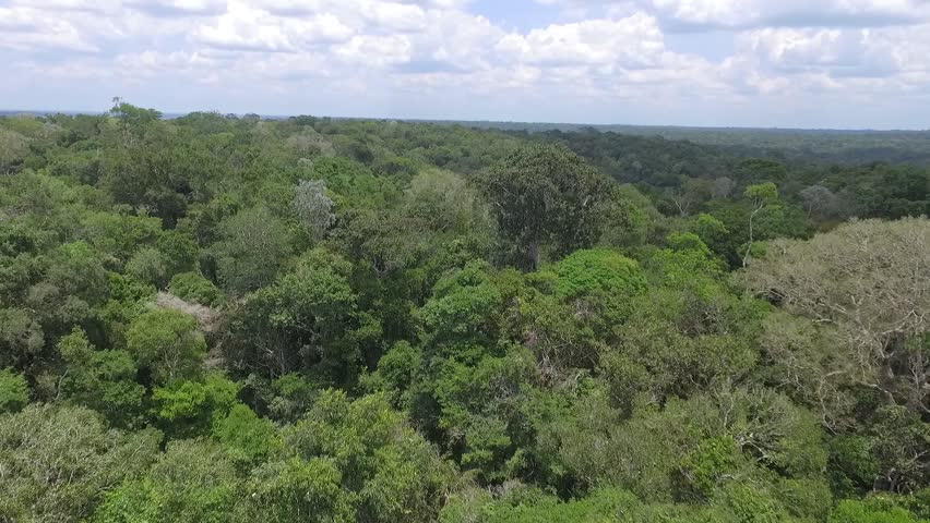 Aerial image of the Amazon Rainforest by drone | Shutterstock HD Video #1020891631