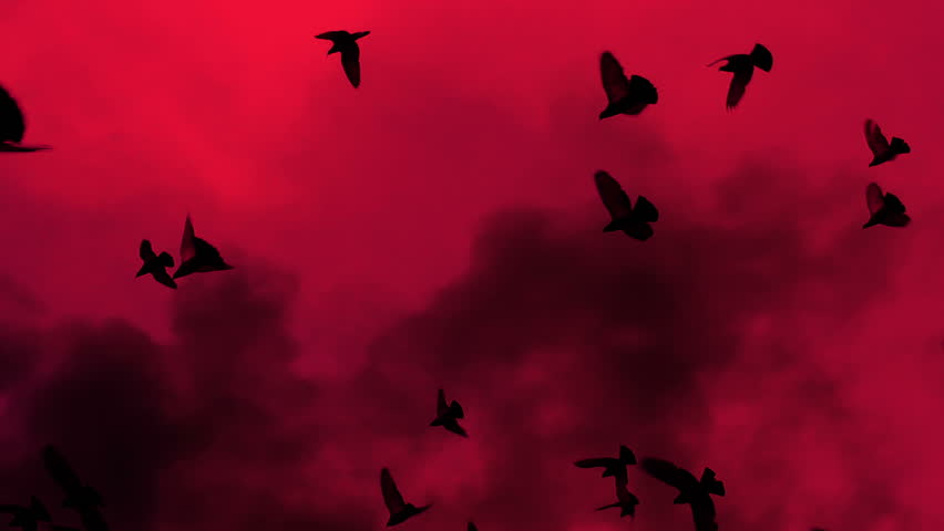 A flock of black birds slowly circling against the red sky and billowing smoke. Gradually increasing the number of birds. Slow Motion at a rate of 480 fps | Shutterstock HD Video #1021555051