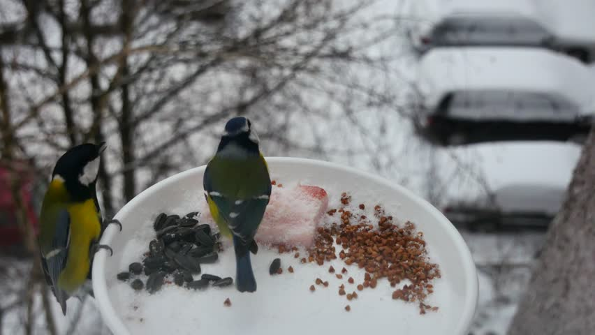 Titmouses are eaten from a feeding trough in snowfall. | Shutterstock HD Video #1021923961