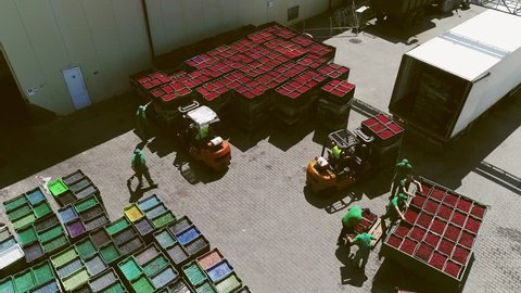Aerial View. Loaders Carries Large Boxes Of Fruits. Ripe Fruit Are In Boxes. Forklifts Unloads A Truck. People Fold Boxes.