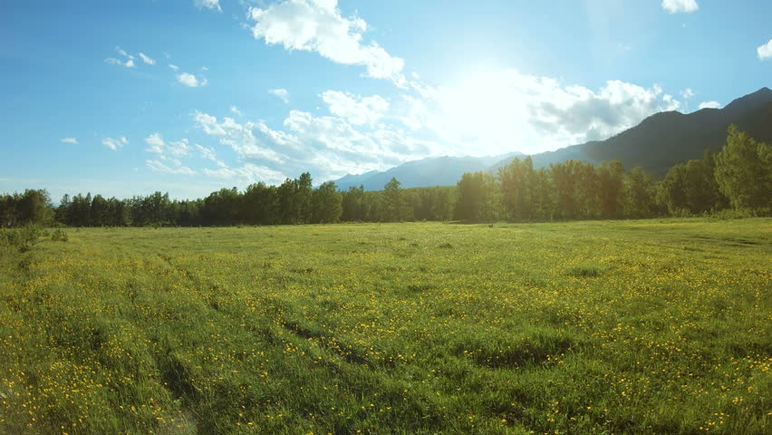 Yellow wildflowers on the meadow in sunny day. Rural landscape | Shutterstock HD Video #1022146201