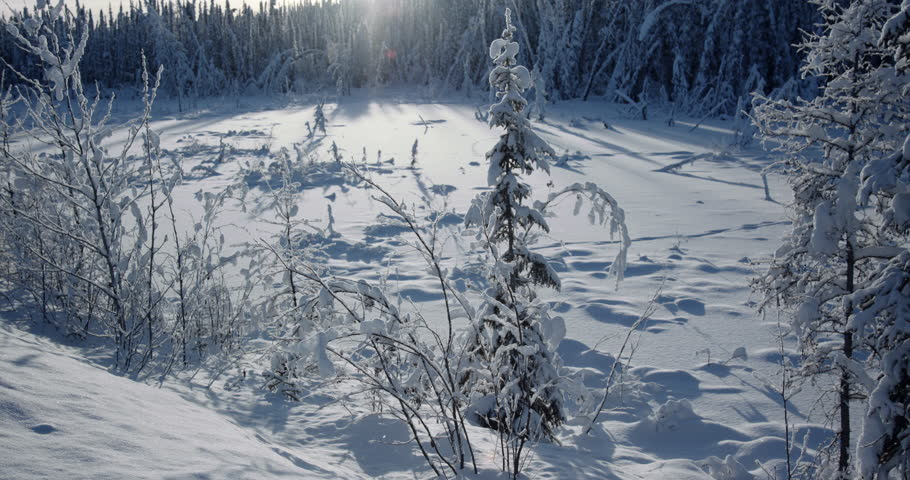 Winter Wonderland - Slow cinematic tilt up of a beautiful Northern Canada winter scene. Hoar frost covered trees -35C. Source File RAW at 23.98p.
