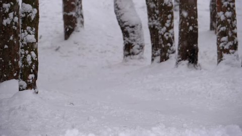 Child Sledding Down a Snowy Hill in Pine Forest. Slow Motion in 180 fps. Happy boy moves down on sled backlit. Boy sledding down hills, sleigh ride through snow. The descent on snowy slope in woods