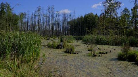 Wetland duckweed and tree rests