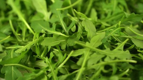 Closeup top view of white plate full of fresh green arugula salad leaves rotating isolated on white background. Rucola ready for eating. Real time full hd video footage.