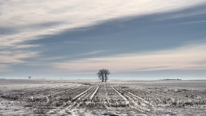 One tree in farm field during winter with black dirt partially revealed in light snow cover as well as long clouds above and sliver of blue sky.