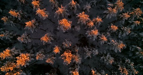 Aerial, birdseye, drone shot, sideways over the last sun flares, reflecting on snow covered trees, first snow, on a sunny, winter evening, at sunset, in Uusimaa, Finland, Scandinavia