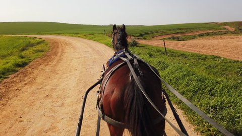 Dark brown horse pulling a Carriage on a dirt path on a sunny day at 60fps.