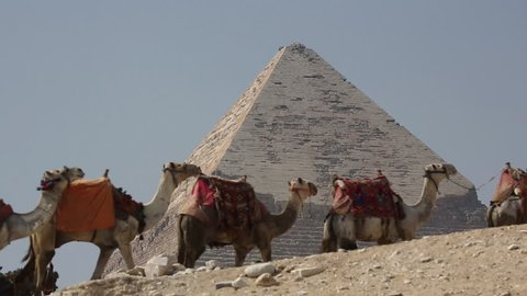 Camels Pass By Egyptian Pyramid Slow Motion