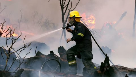 Fire fighter in yellow hat with smoke filter sprays water & carefully treads forward over black charred tree trunks as strong flames & reddened smoke rise from burning bush behind him, close up pan
