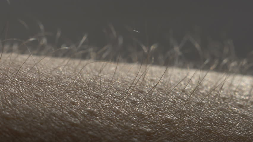 Goosebumps macro. Hair on the hand rise up. Skin reaction to cold, fear, or good music. Horripilation on skin.  | Shutterstock HD Video #1024191941