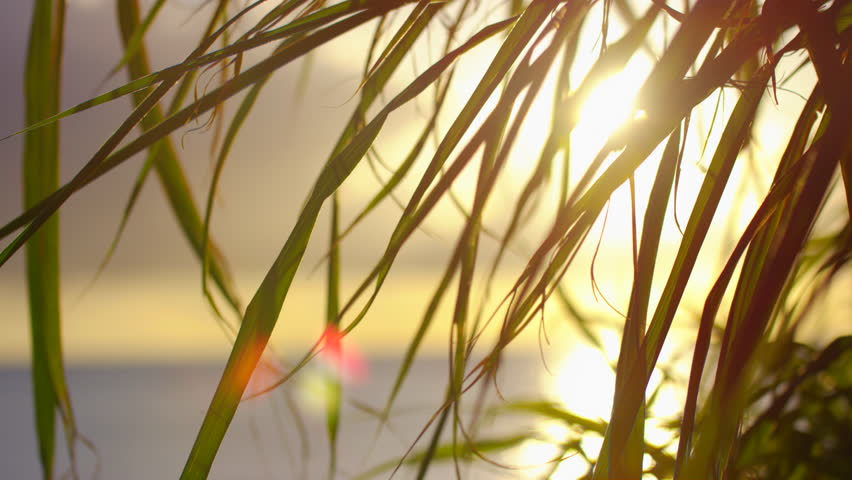 Grass Blowing In Wind At Sunset. Slow motion. | Shutterstock HD Video #1024318691