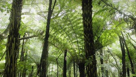 Aerial: Slider shot of tropical fern trees in native forest interior. Coromandel Peninsula, New Zealand